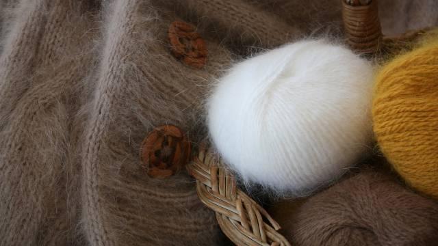 Angorski kunić: jJupka životinja koja donosi veliku zaradu godinama   - © Pixabay