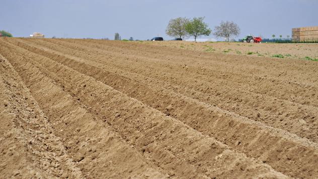 Pančevačke oranice kvalitetnije od evropskih - © Agromedia