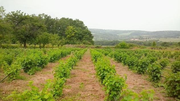 Obrazovanje poljoprivrednika uslov za razvoj organske proizvodnje u Srbiji - © Agromedia