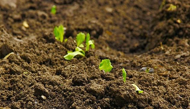 Analiza zemljišta je veoma važna za gajenje bilo koje kuture - © Pixabay