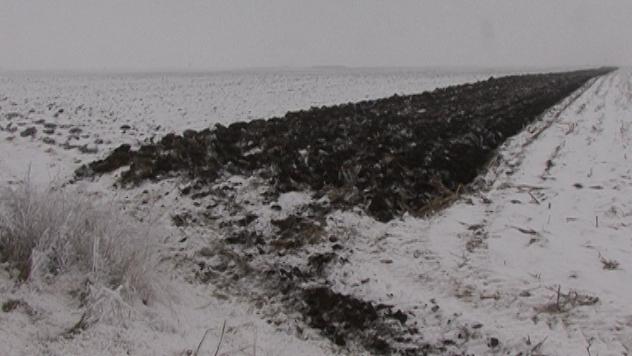 Zima na njivi - ©Agromedia