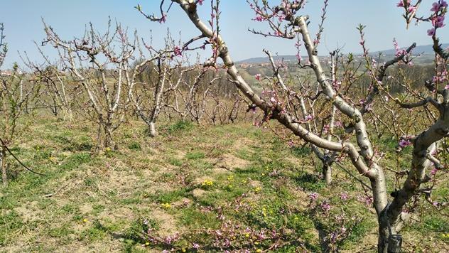 Niska cene jabuke - © Julijana El Omari/Agromedia