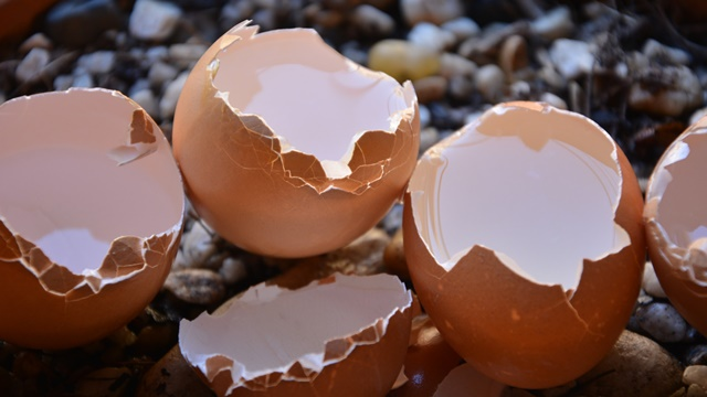 Ljuske od jaja protiv truleži - © Pixabay