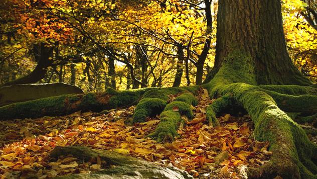 Jezik drveća © Pixabay