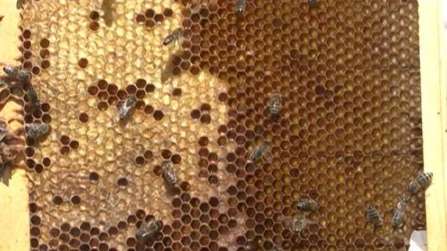 Međunarodna pčelarska konferencija i izložba pčelarske opreme