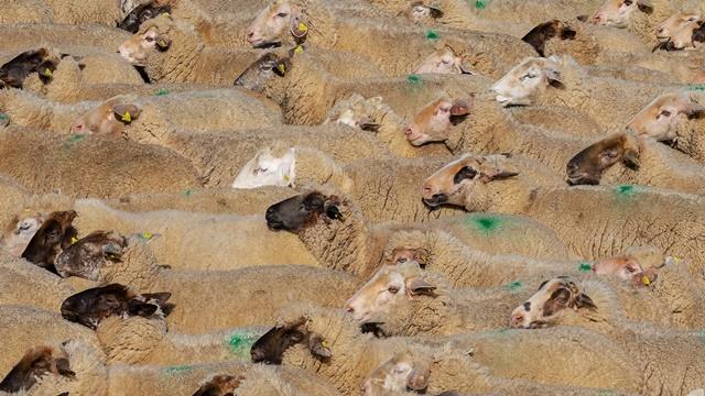 Ovčarski dani u Sakulama