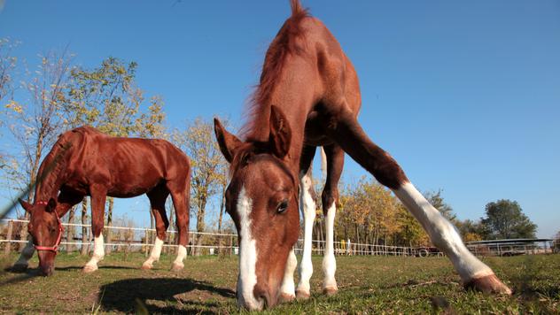 Konji na salašu ©AGROmedia