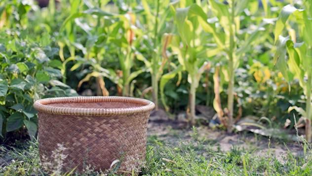 Mladim bračnim parovima država će poklanjati zemlju na selu - © Pixabay