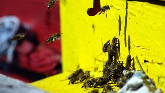 Urbano pčelarstvo - © Pixabay