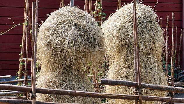 Napravite kvalitetnu silažu i seno za ishranu krave - © Pixabay