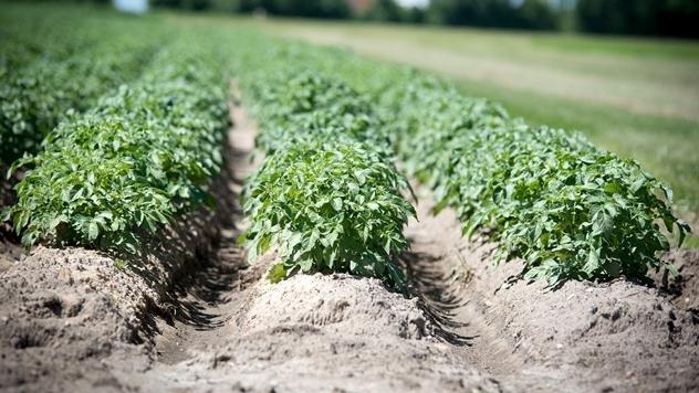 Ilustracija: Zdrav krompir - © Pixabay