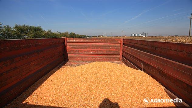 Ilustracija proizvodnja kukuruza - © Agromedia