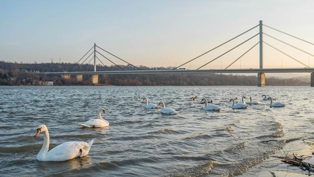 Most preko Dunava u Novom Sadu - © Pixabay