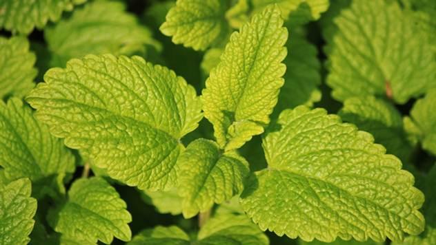 Uzgoj lekovitog bilja šansa za mala poljoprivredna gazdinstva - © Pixabay