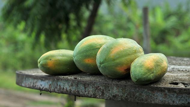 Plod papaje © Pixabay