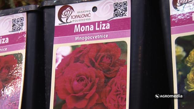 Sorta Mona Liza © Agromedia