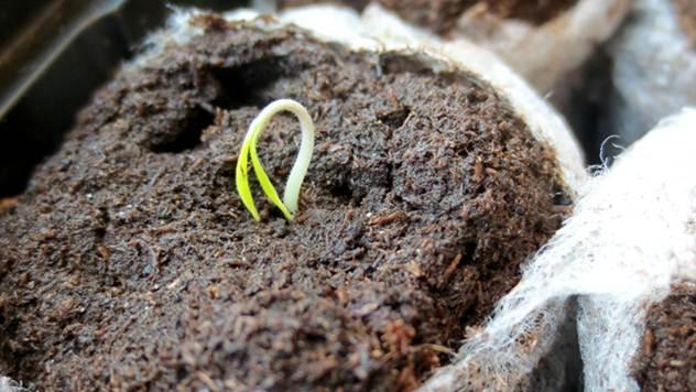 Imate seme koje neće da klija? Saznajte gde ste pogrešili! - © Pixabay
