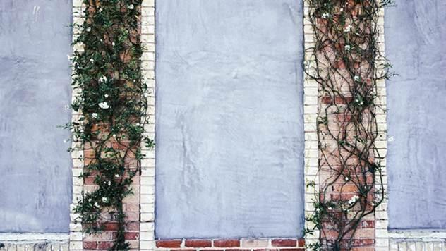 Ozelenite i sakrijte neugledne površine u vašem dvorištu - © Pixabay
