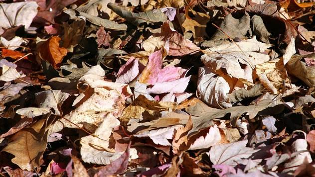 Opalo lišće - © Pixabay