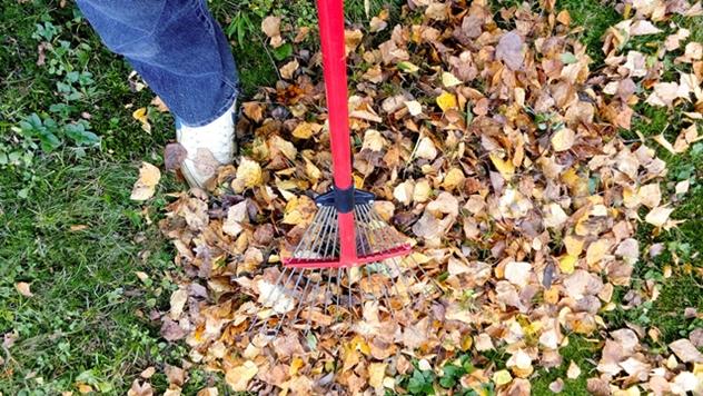 Šta uraditi kada lišće počne da opada - © Pixabay