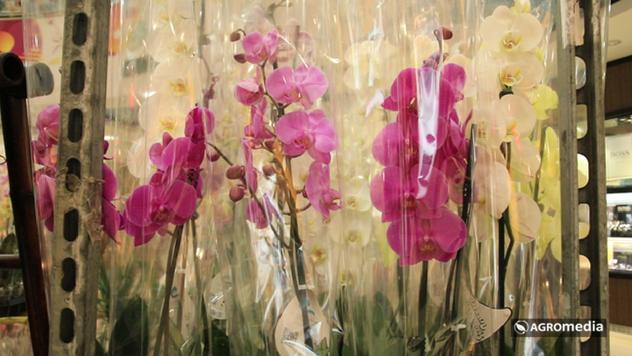 Orhideje © Agromedia