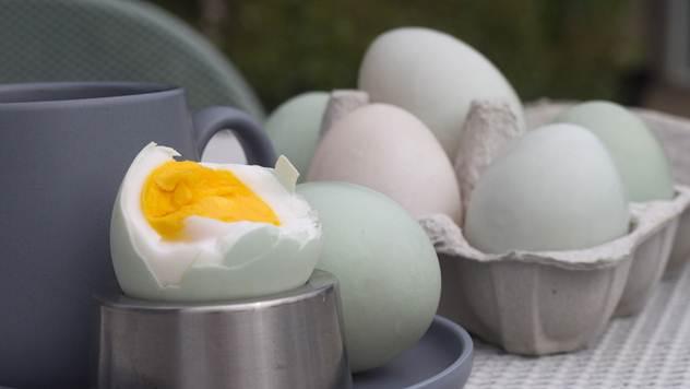 Sve što niste znali pačijim jajima - © Pixabay