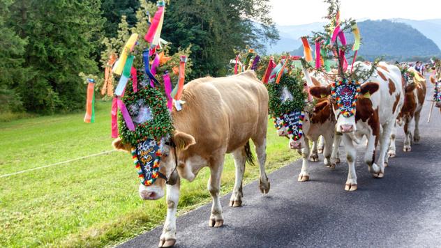 Parada goveda na Alpima ©Pixabay