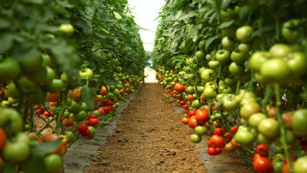 Česta promena vremena utiče loše na razvoj biljaka - © Agromedia