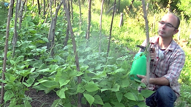 Prihrana pasulja i boranije - © Agromedia