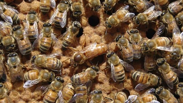 Radovi u pčelinjaku - © Pixabay