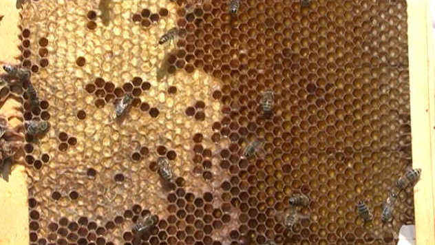 Pčele - © Agromedia