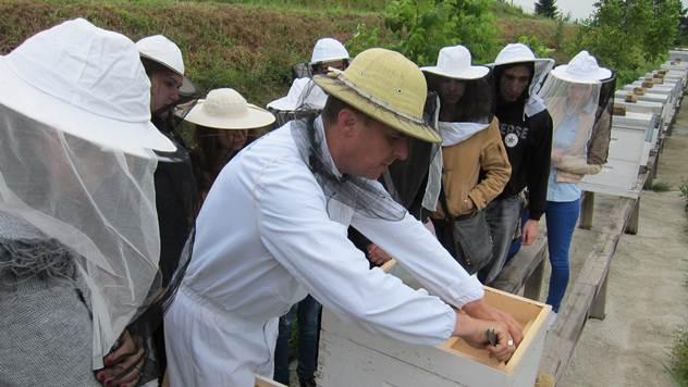 Pomor pčela - © Tanja Prolić/Agromedia
