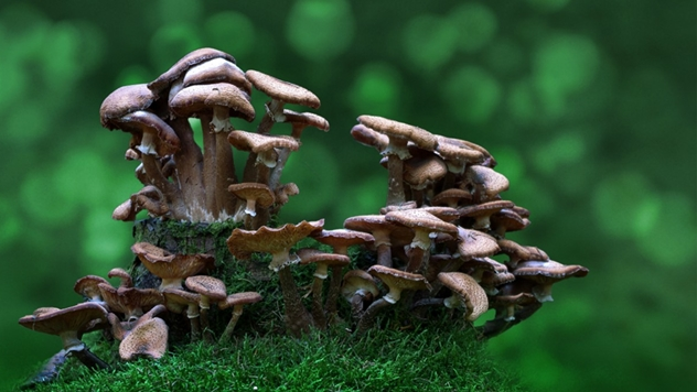 Ilustracija: Pesticidi napravljeni od pečuraka mogu biti budućnost zaštite bilja - © Pixabay