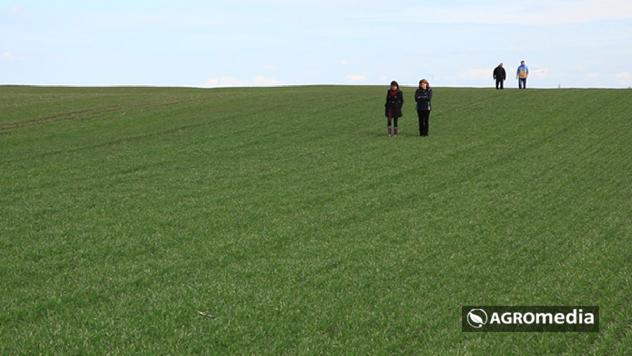 Usevi pšenice © Agromedia