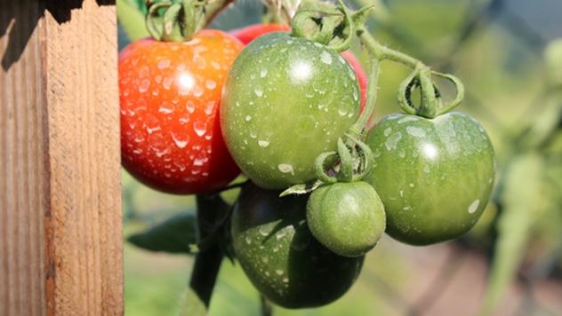 Upotreba pesticida samo uz sertifikat - © Pixabay