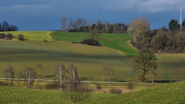Pod korovom u Srbiji 12,3% poljoprivrednog zemljišta - ©Pixabay