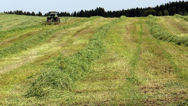 Košenje trave - © Pixabay