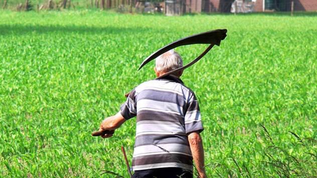 Oko 300.000 sezonaca u poljoprivredi radi na crno - © Pixabay