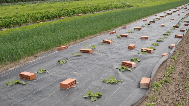 Ilustracija: Upotreba Agrotekstila u poljoprivredi - © Pixabay