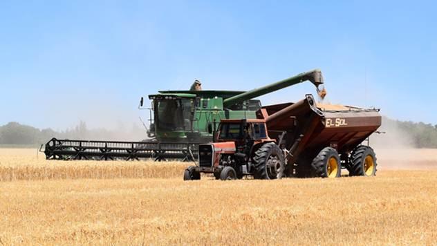 Žetva pšenice - © Pixabay