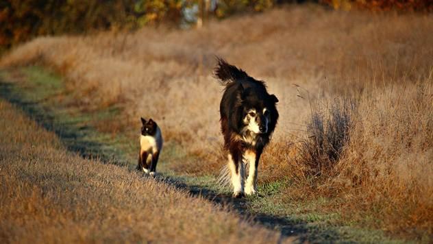 Čuvanjem pasa i mačaka smanjuje se broj glodara - © Pixabay