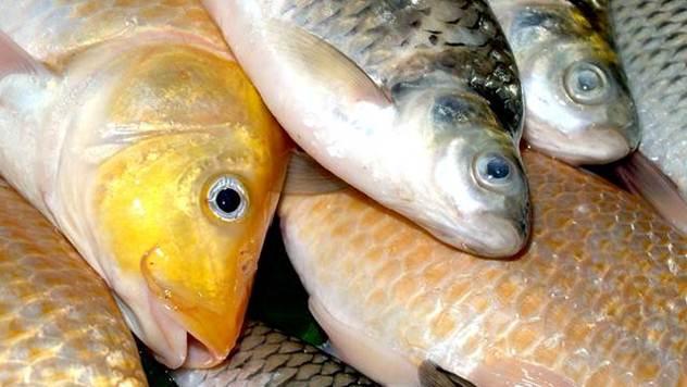 Kontrola ribe - © Agromedia