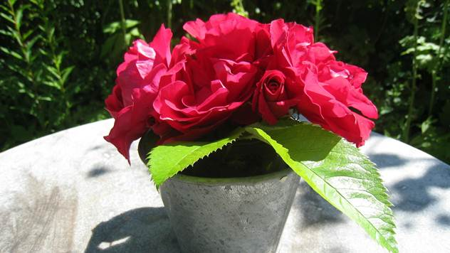 Ruže - © Pixabay