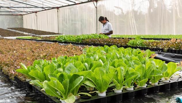 Prilika za poljoprivrednike iz Dobrinaca da sarađuju sa velikom italijanskom firmom - © Pixabay