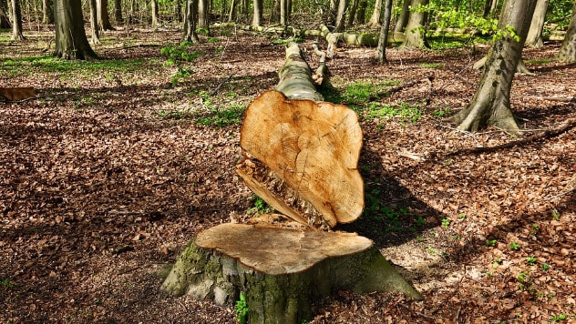 Seča šuma u zbog organske proizvodnjei - ©Pixabay