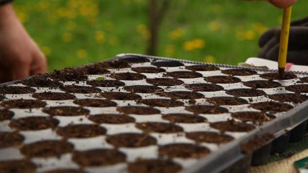 Poboljšajte supstrat za setvu semena - ©Agromedia