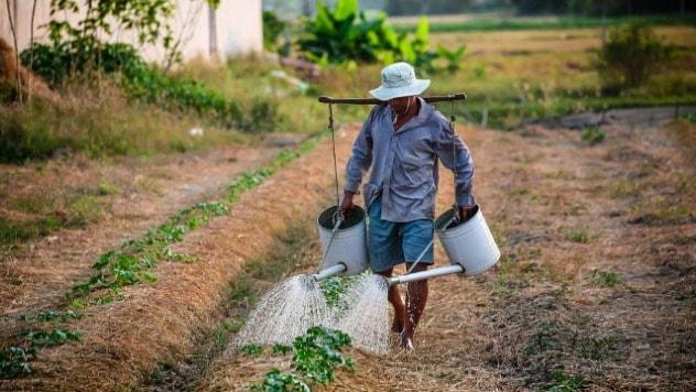 Sezonski radnici - © Agromedia