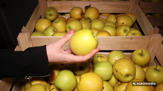 Jabuke u hladnjači