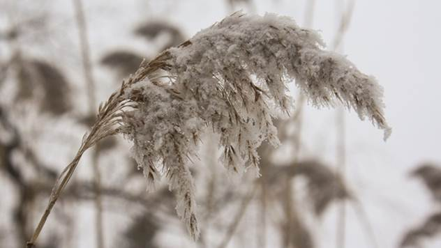 Pojava korenčića, porast listića i beličasta boja čvora bokorenja jasno pokazuju da je biljka preživela - © Pixabay