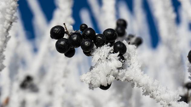 Ilustracija: Voćnjak  pod snegom - © Pixabay